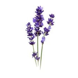 Portrait de Catherine Lavaud
